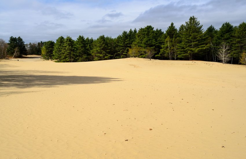 Desert of Maine surrounded by pine trees