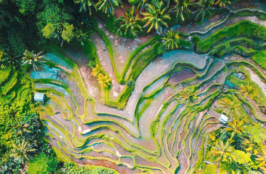 Aerial view of Rice Terrace in Indonesia
