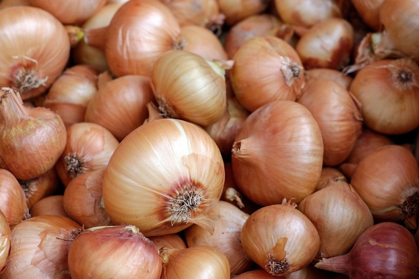 Pile of onions