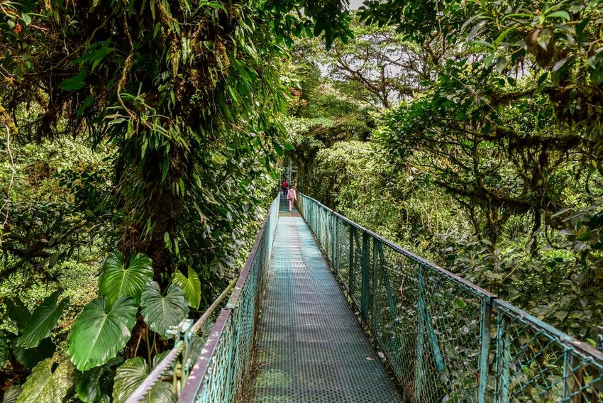 Bridge through Monteverde Cloud Forest Reserve in Costa Rica