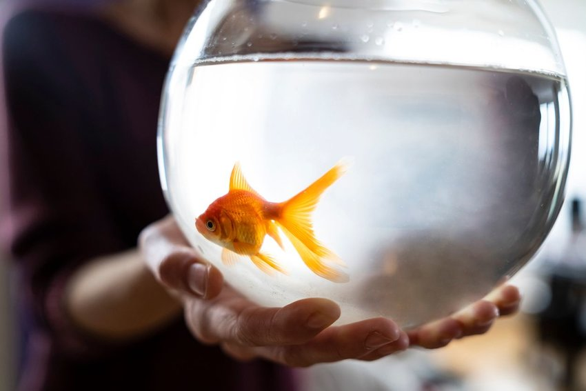 Person holding a goldfish bowl