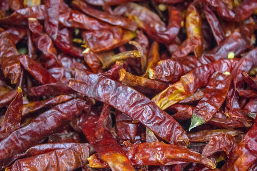 Dried chile guajillo pepper background