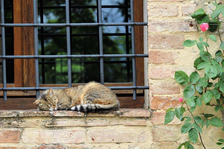 Cat taking a nap on a window outside