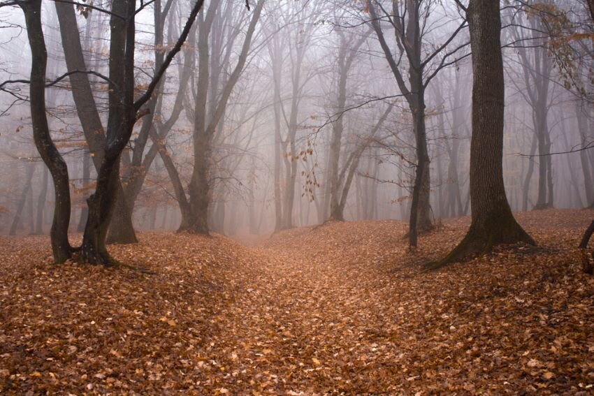 Hoia Baciu Forest in a autumn foggy day.