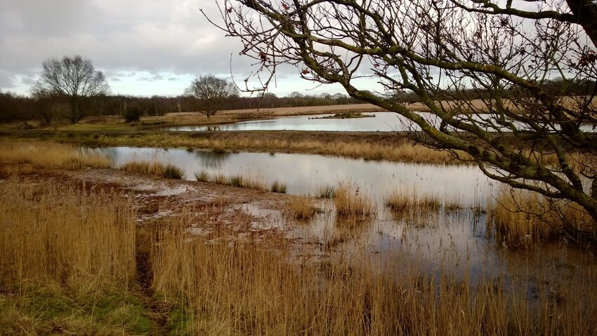 Marshy landscape of Norfolk, England, under gray clouds